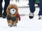 """ฮ่องกงยืนยัน """"สุนัขติดเชื้อโควิด-19 จากเจ้าของ"""" – แพร่เชื้อจากคนสู่สัตว์เป็นรายแรก"""