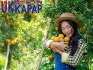 ส้ม มีสรรพคุณและประโยชน์อย่างไรบ้าง