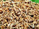 ข้อมูลโภชนาการ ใน ปลาเล็กปลาน้อยทอดกรอบ 1 ช้อนโต๊ะ ให้พลังงานทั้งสิ้น เท่ากับ